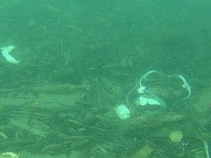 vue sous-marine